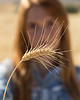 Wheat Field Girl 127