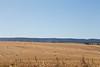 Wheat Harvest 149