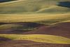 Wheat Fields in Spring 100