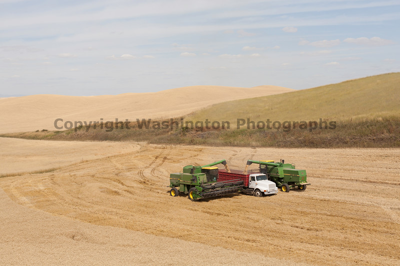 Wheat Harvest 116