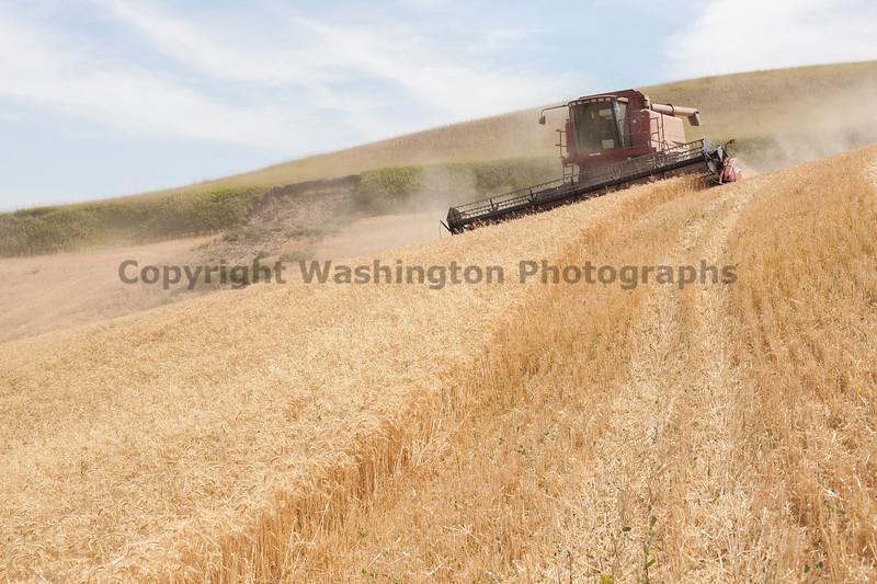 Wheat Harvest 114