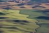 Steptoe Butte Spring 228