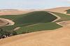 Vineyard - Walla Walla 26