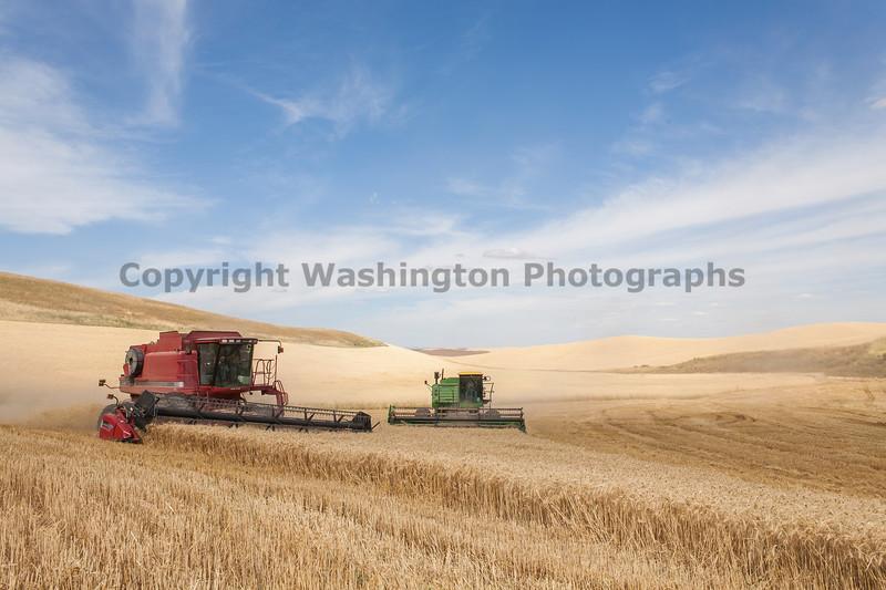 Wheat Harvest 119