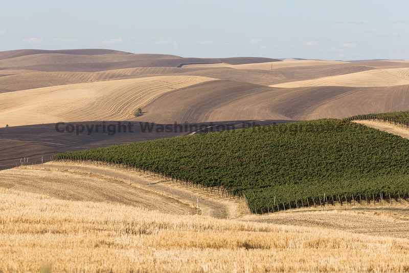 Vineyard - Walla Walla 17
