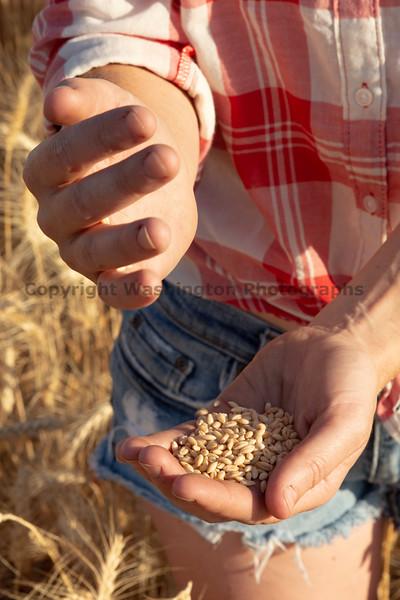 Wheat Farm Girl 290