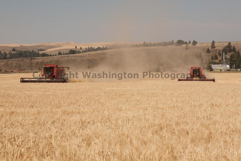 Wheat Harvest 62