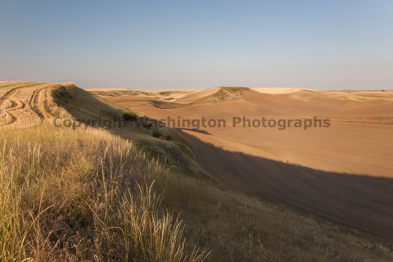 Wheat Fields in Summer 53
