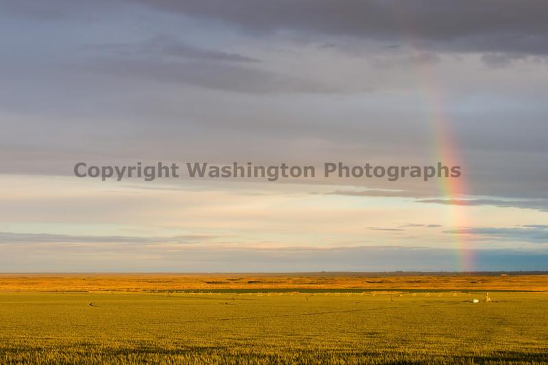 Rainbow Field 11