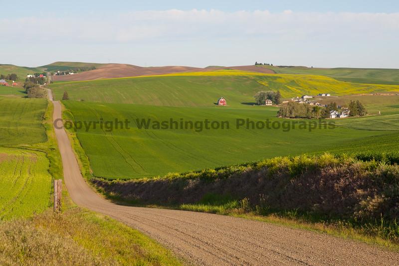 Wheat Fields in Spring 117