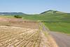 Wheat Fields in Spring 029
