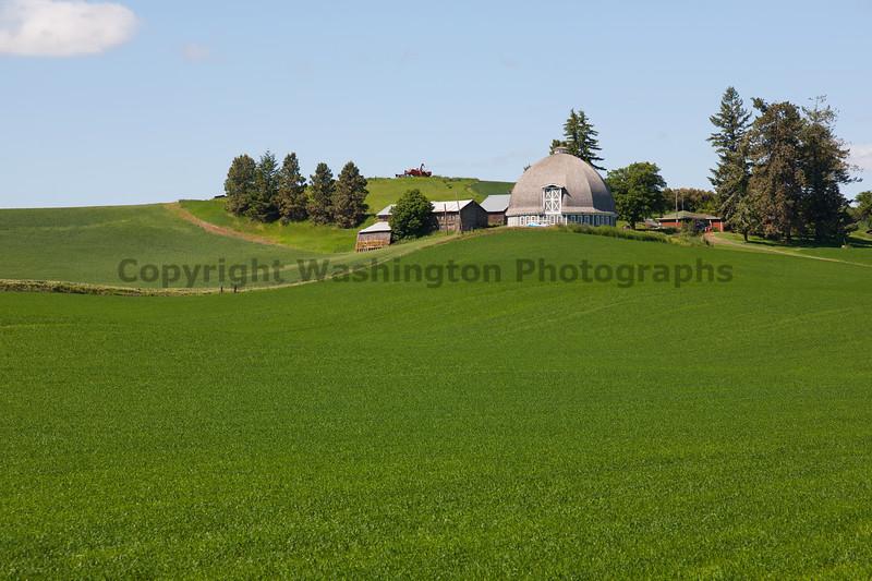 Wheat Fields in Spring 10