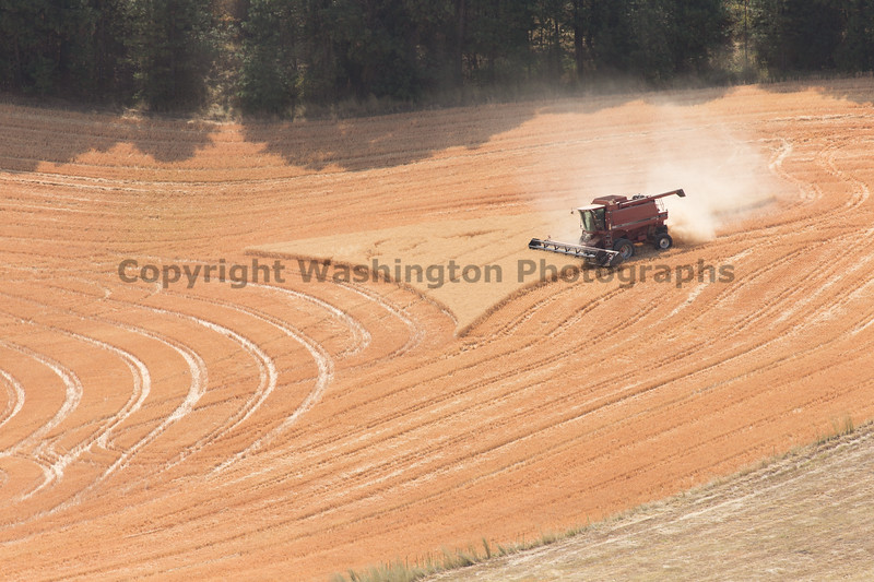 Wheat Fields in Summer 119