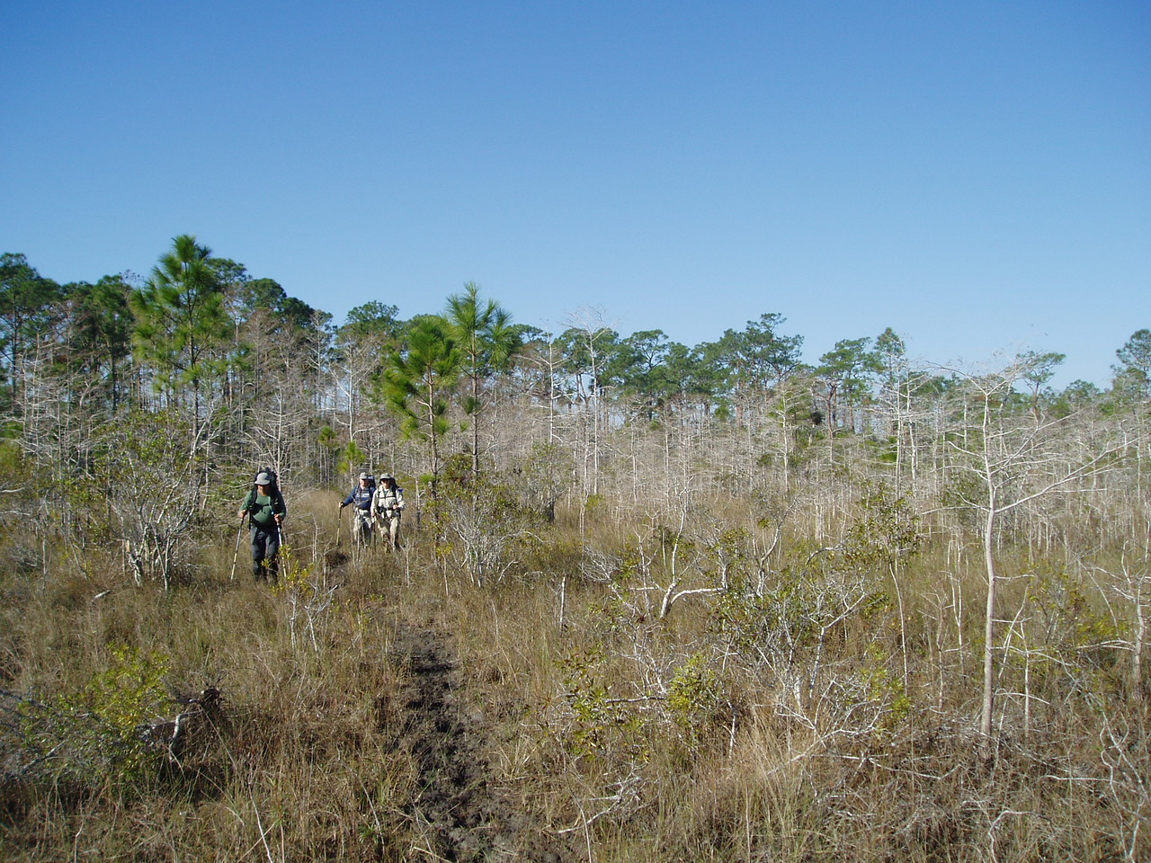 Backpacking Big Cypress<br /> PHOTO CREDIT: Robert Coveney / Florida Trail Association