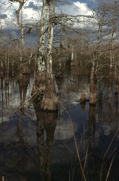 Big Cypress<br /> PHOTO CREDIT: Mary Ann Supple / Florida Trail Association