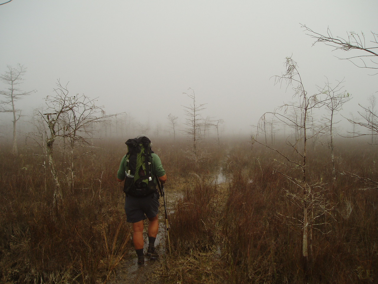 Foggy morning<br /> PHOTO CREDIT: Robert Coveney / Florida Trail Association