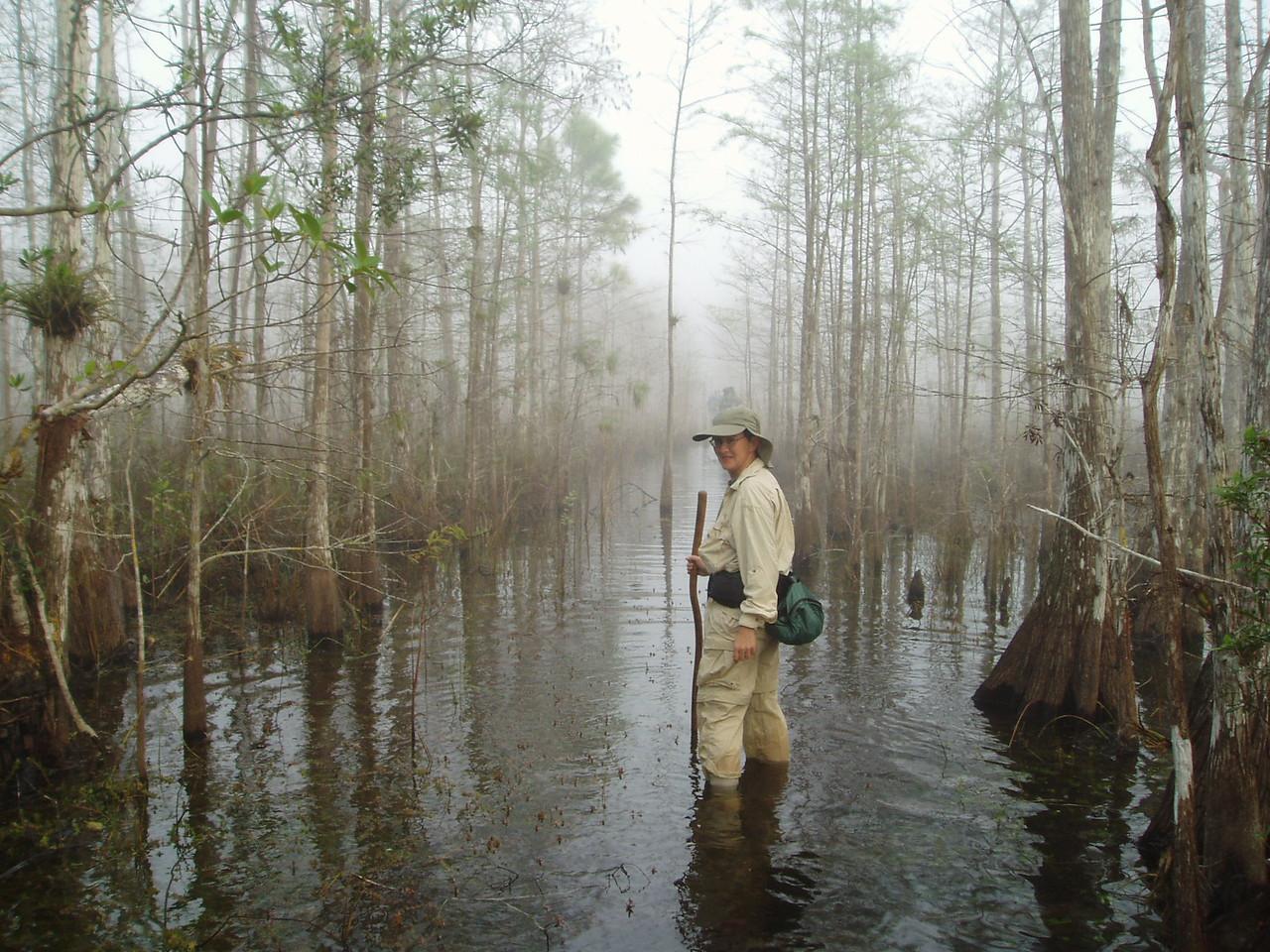 Shortcut takes a hike<br /> PHOTO CREDIT: Robert Coveney / Florida Trail Association