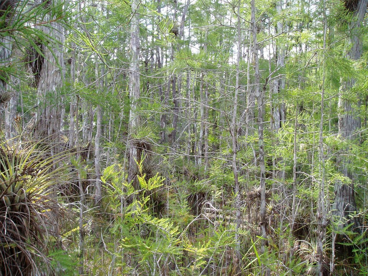 Big Cypress<br /> PHOTO CREDIT: Deb Blick / Florida Trail Association