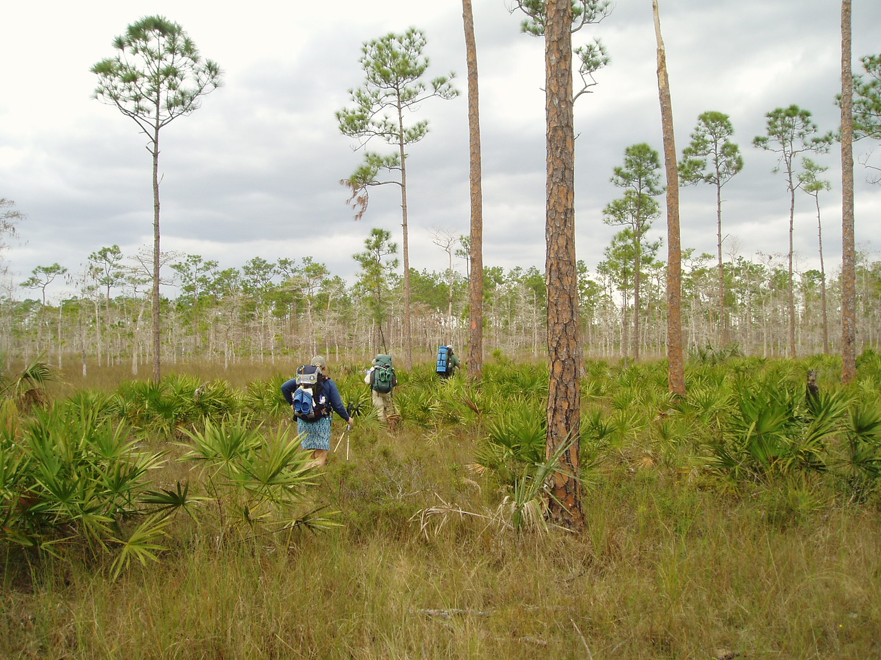 In the flatwoods<br /> PHOTO CREDIT: Robert Coveney / Florida Trail Association