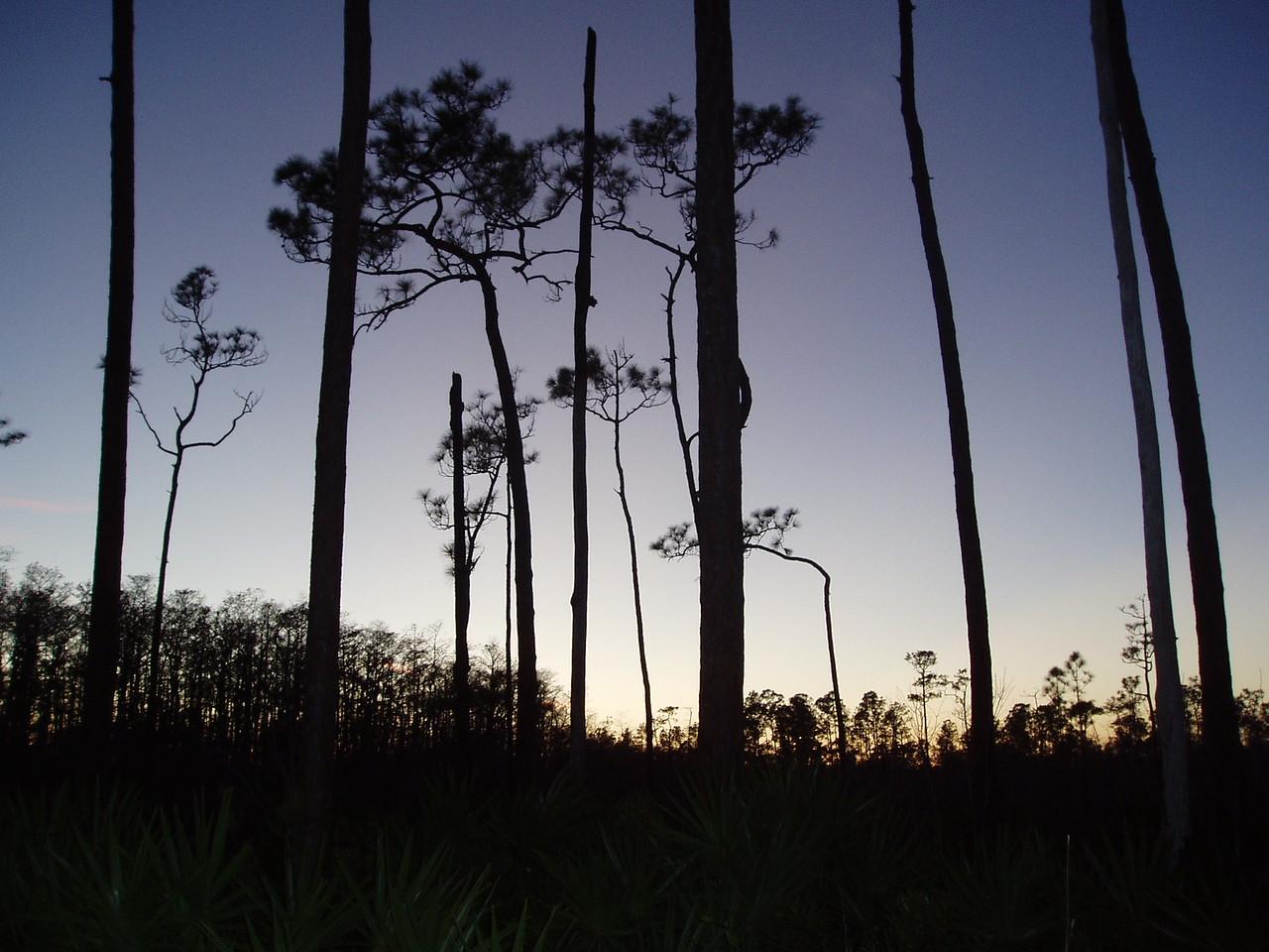 Sunrise<br /> PHOTO CREDIT: Robert Coveney / Florida Trail Association
