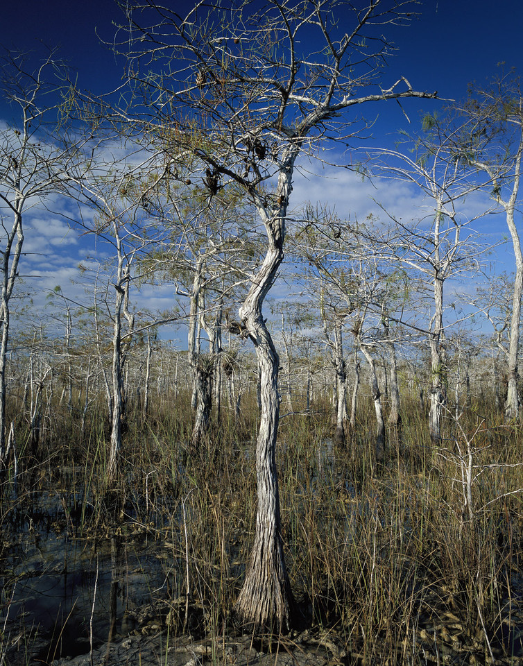 Big Cypress<br /> location: Big Cypress National Preserve<br /> PHOTO CREDIT: Peter Nolan / Florida Trail Association