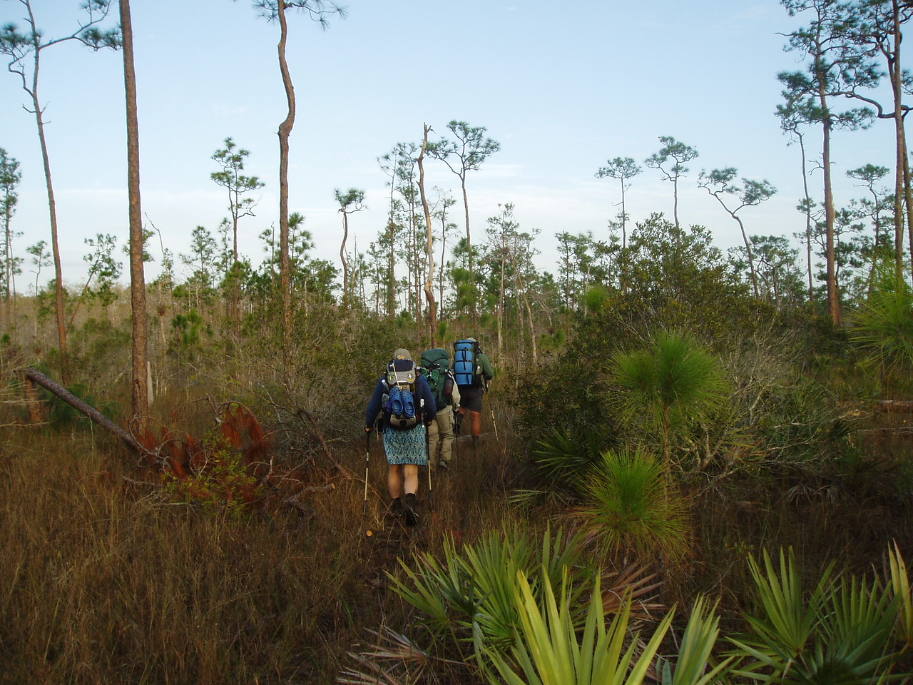 Backpacking through Dade County pine<br /> PHOTO CREDIT: Robert Coveney / Florida Trail Association