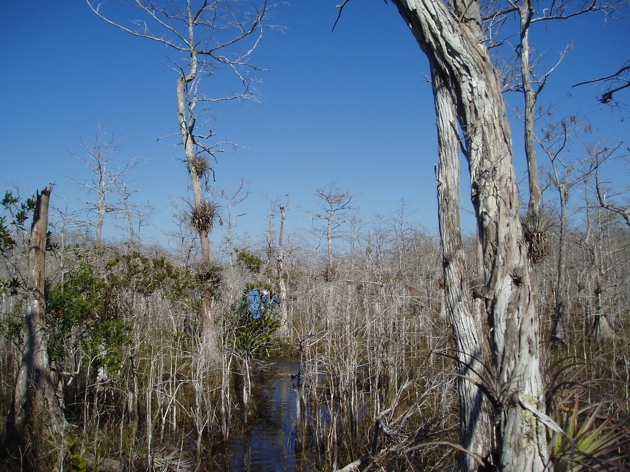 Big Cypress<br /> PHOTO CREDIT: Robert Coveney / Florida Trail Association