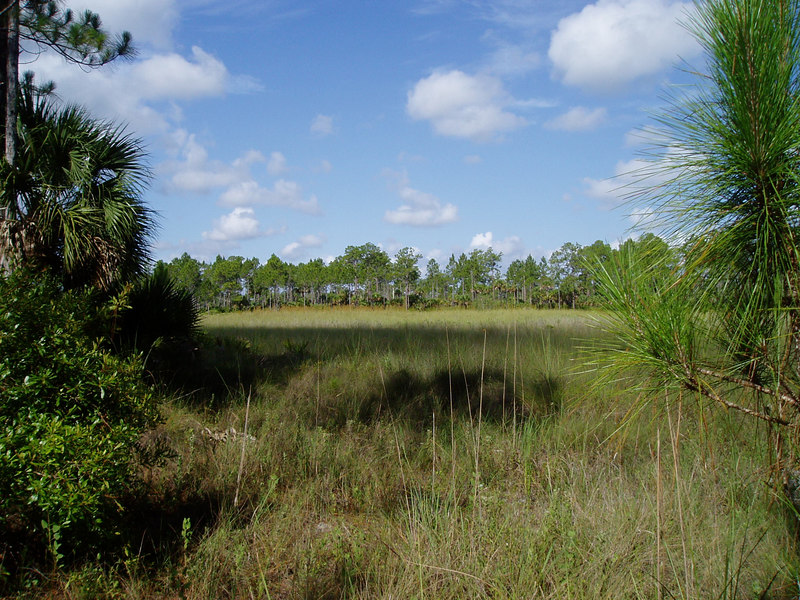 Big Cypress<br /> PHOTO CREDIT: Deb Blick / Florida Trail Association