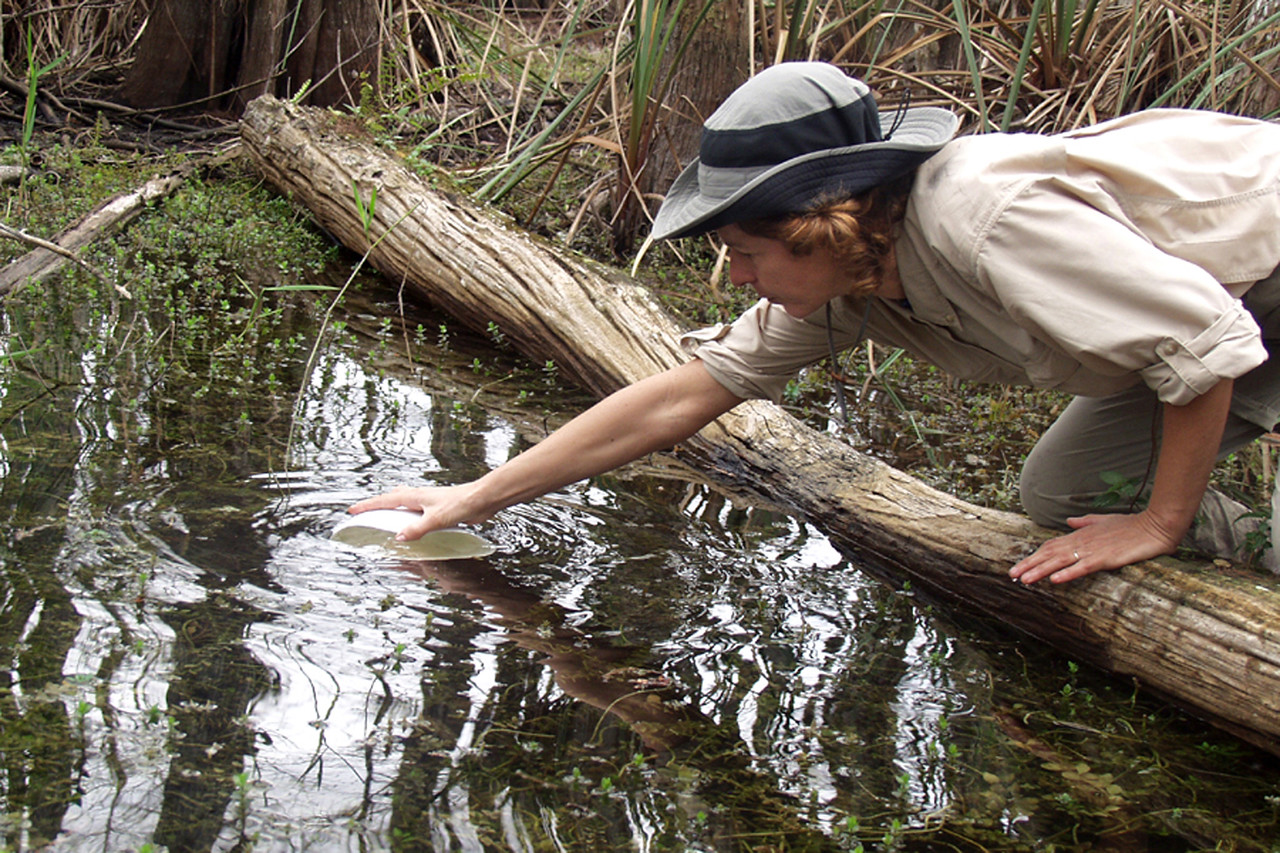 Annette Coughlin dips water from a Cypress Dome near the group's campsite at 10-mile camp.  <br /> PHOTO CREDIT: Donn Brown / Florida Trail Association