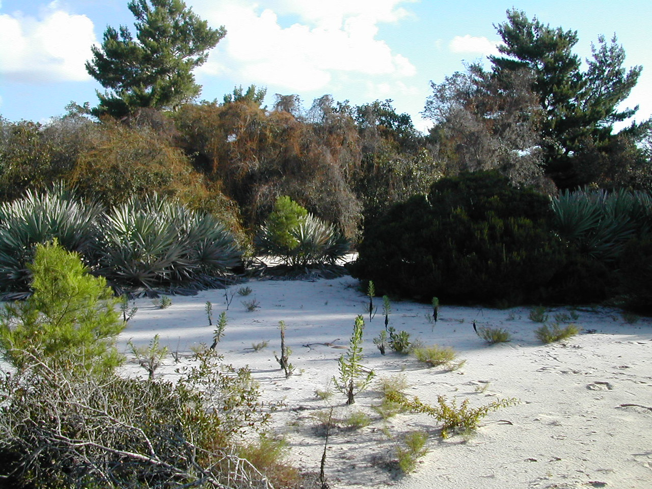 Seabranch Preserve<br /> Photo by Sandra Friend