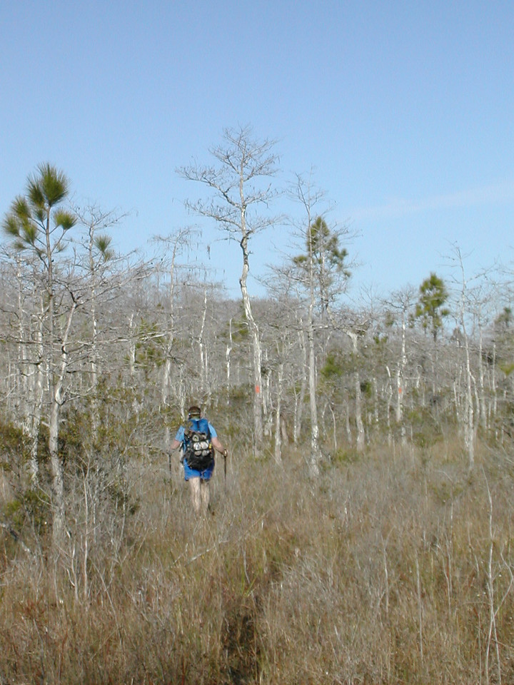 Backpacker on the Florida Trail in Corbett WMA<br /> photo credit: Sandra Friend / Florida Trail Association