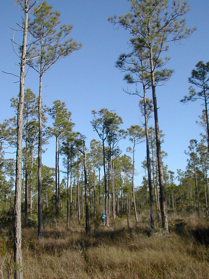 Hiking the Florida Trail in Corbett WMA<br /> photo credit: Sandra Friend / Florida Trail Association