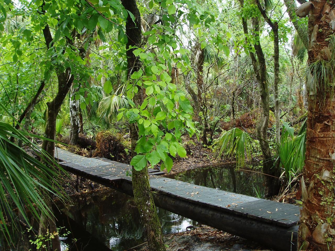 Crossing Kitching Creek, Jonathan Dickinson State Park<br /> photo credit: Robert Coveney / Florida Trail Association