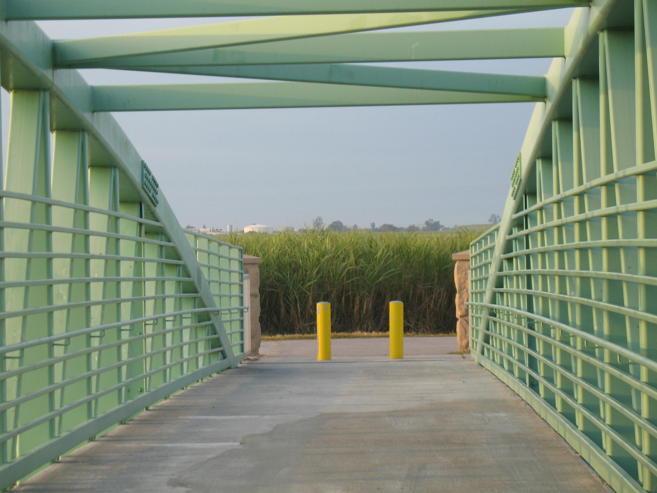Wall of sugar cane at the bridge at Belle Glade<br /> PHOTO CREDIT: Sandra Friend / Florida Trail Association