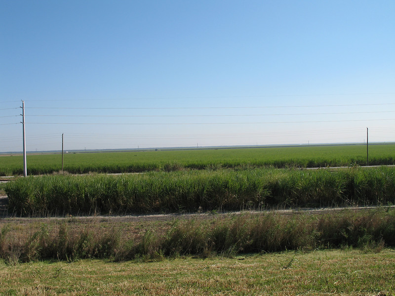 Sugar cane fields near Pahokee<br /> PHOTO CREDIT: Sandra Friend / Florida Trail Association