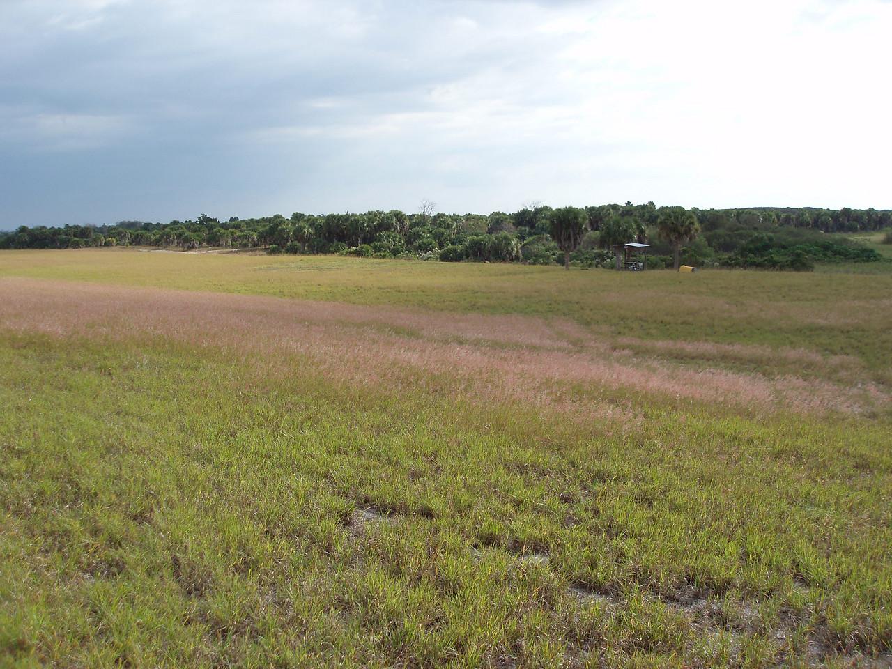 Indian Prairie campsite<br /> PHOTO CREDIT: Robert Coveney / Florida Trail Association