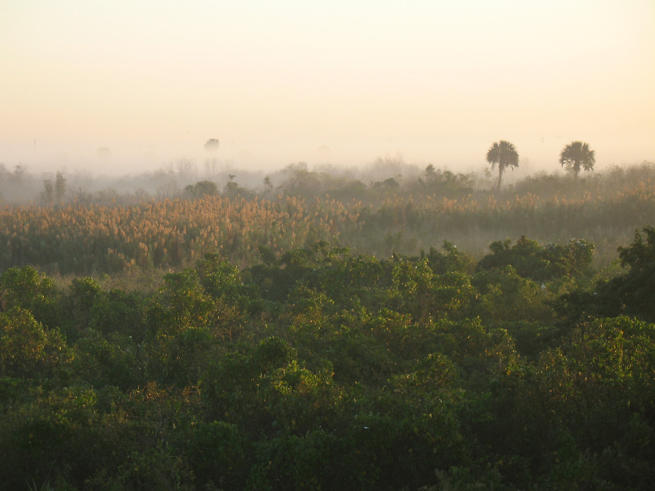 Fog-shrouded marshes at Moore Haven<br /> PHOTO CREDIT: Sandra Friend / Florida Trail Association