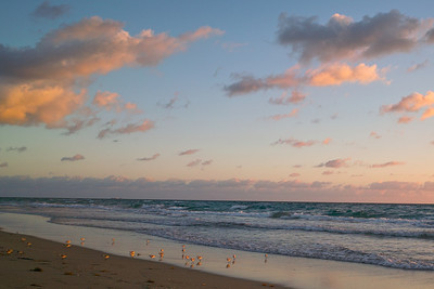 Sanderling Sunrise