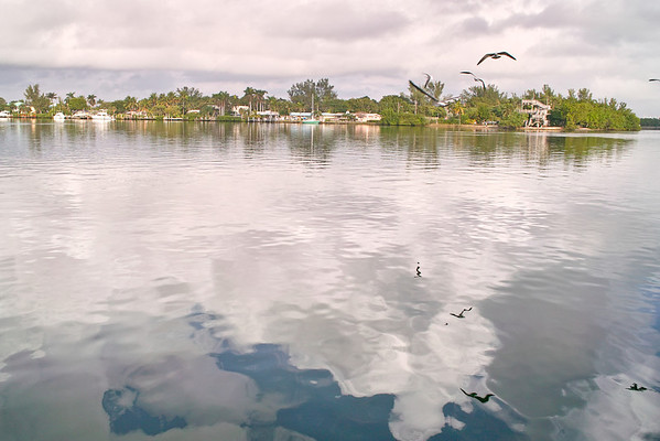 Gull reflections in the Intercoastal in Hollywood Florida.