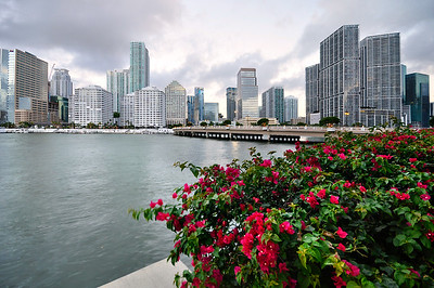 Flower garden in Brickell, Downtown Miami