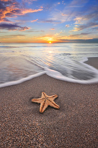 Starfish on the beach, Fort Lauderdale, Florida