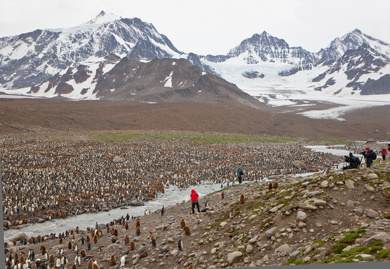 Exploring along the gigantic King Penguin colony at St. Andrews Bay on South Georgia. By Doug Cheeseman in Jan 2008.
