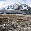 King Penguin rookery, St. Andrews Bay, South Georgia, by Joe Tieger, October 28, 2016