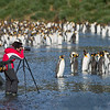Photographing King Penguin colony on South Georgia. By Ted Cheeseman in Jan 2004.