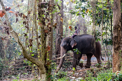 South India 2016_Kodanad Elephant Orphanage (Coachin)