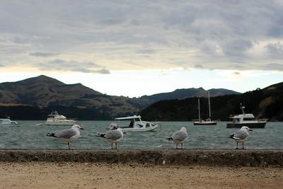 South Island 177.JPG