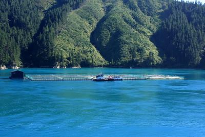South Island 012.JPG