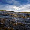 Vieste (FG)<br /> Lichens