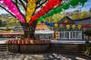 The Gwaneumsa Temple at the foot of Mt. Halla in Ara-dong in Jeju City, Jeju Island, South Korea, Asia.