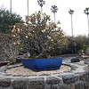 Остров Чеджу. Думающий парк (Spirited Garden). Дерево бонсай